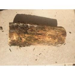 Weißfauler Holzstamm S weich