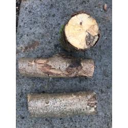 Weißfauler Holzstamm S mittel