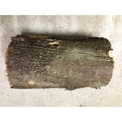 Weißfauler Holzstamm