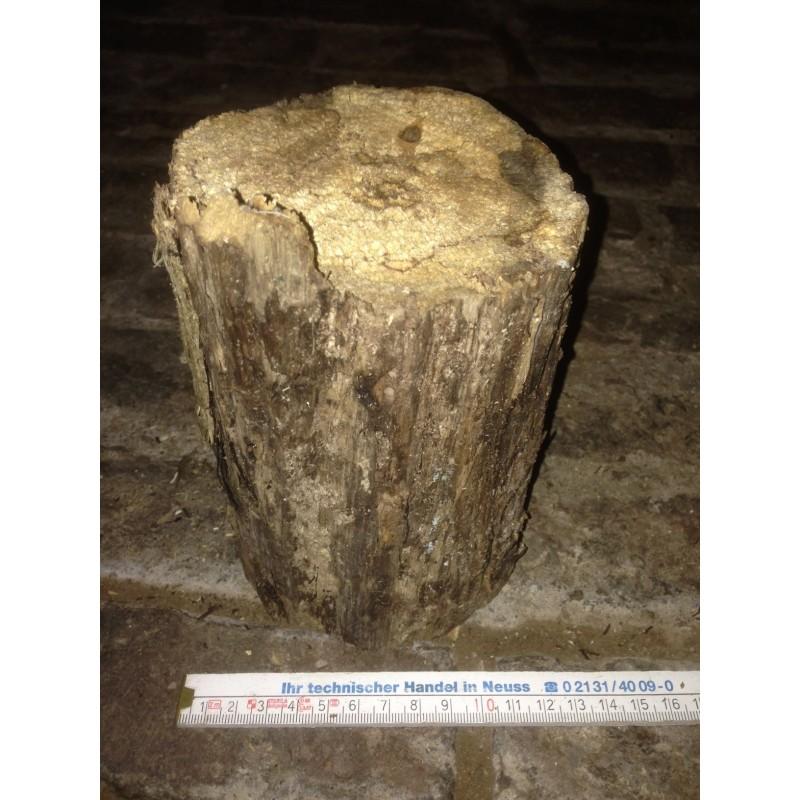 Weißfauler Holzstamm XL mittelhart