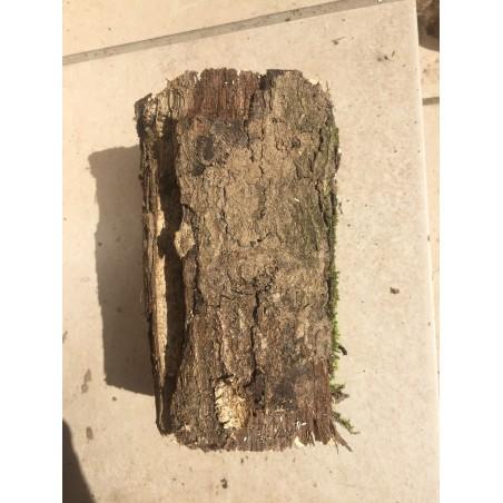 Weißfauler Holzstamm M weich
