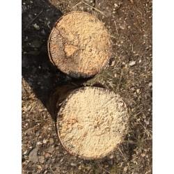 Weißfauler Holzstamm XL weich