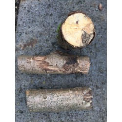 White-rotten Breeding Wood S medium decayed