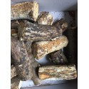 White-rotten Breeding Log S hard decayed
