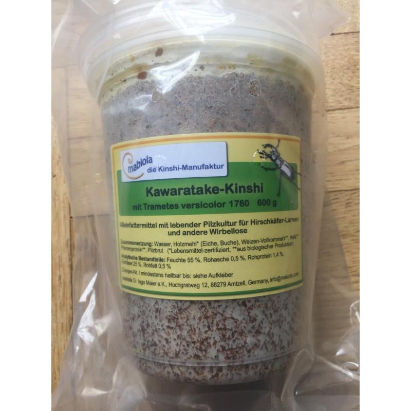Mabiola Kawara Kinshi (Schmetterlingstramete) 1l