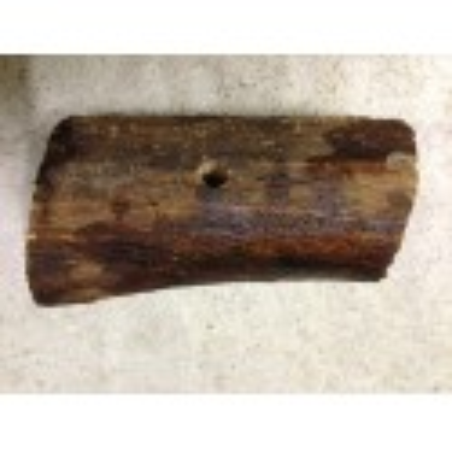 Bacteria Wood Hardwood