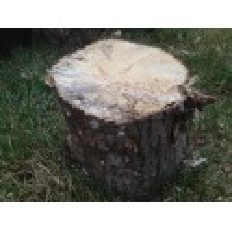 White-rotten Breeding Wood soft/medium XXL