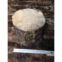 White-rotten Breeding Wood  XL hard