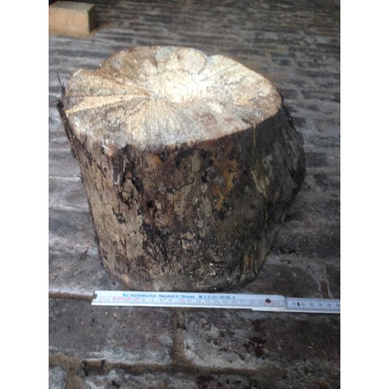 White-rotten Breeding Wood  XL hard